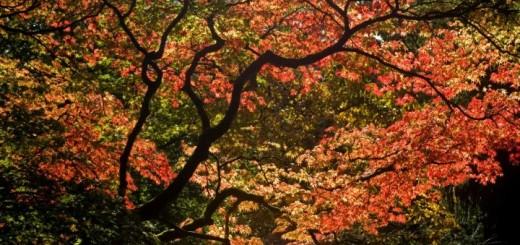 westonbirt-arboretum-1