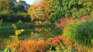 autumn-in-the-garden-by-beth-taylor-web